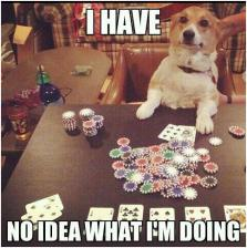 auto-dog-animals-poker-346420